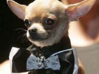 Собачья мода 2012