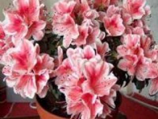 Цветы в нашей жизни