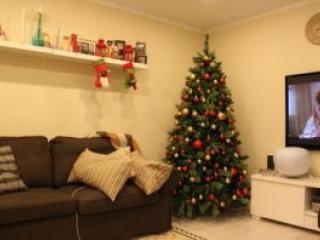 Новогодние елки – неоспоримый атрибут всех  зимних праздников!